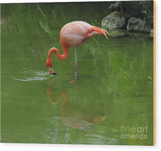 Pink Flamingo Wood Print