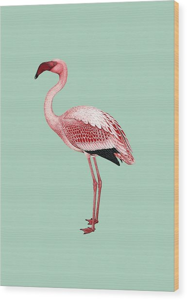 Pink Flamingo Isolated Wood Print