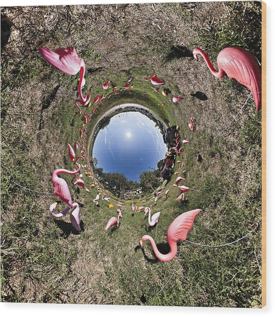 Pink Flamingo Rabbit Hole Wood Print