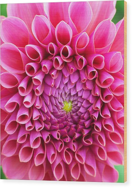 Pink Flower Close Up Wood Print