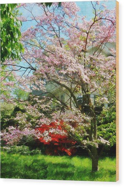 Pink Flowering Dogwood Wood Print by Susan Savad
