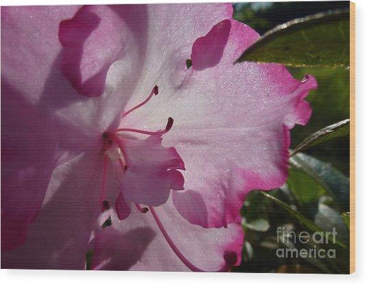 Pink Flowers 1 Wood Print