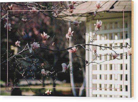 Pink Flowers At Gazebo Wood Print by Helena M Langley