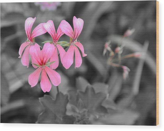 Pink Flowers On A Monochrome Background Wood Print
