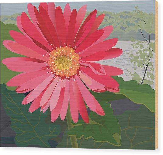 Pink Gerbera Daisy Wood Print by Marian Federspiel