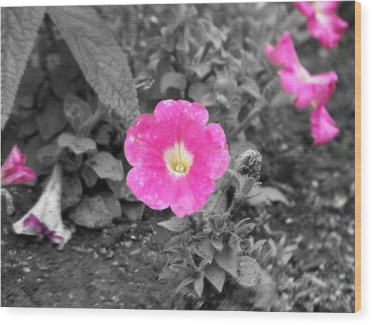 Pink Wood Print by Jessica Burgett