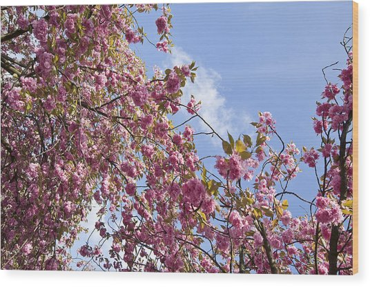 Pink Wood Print by Krista  Corcoran Photography