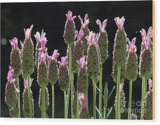 Pink Lavender Wood Print