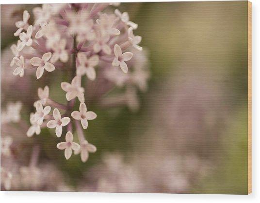 Pink Lilacs Wood Print by Liz Howerton