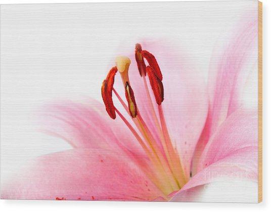 Pink Lilies 08 Wood Print