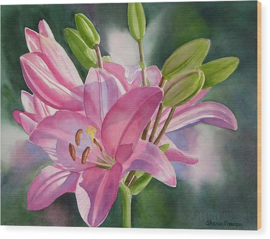 Pink Lily With Buds Wood Print by Sharon Freeman