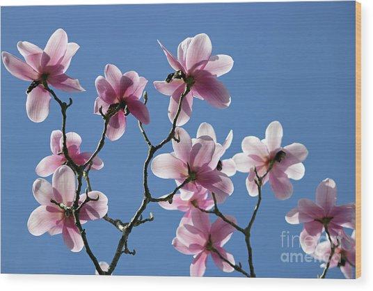 Pink Magnolias  Wood Print