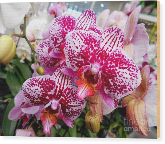 Pink Moth Orchids Wood Print