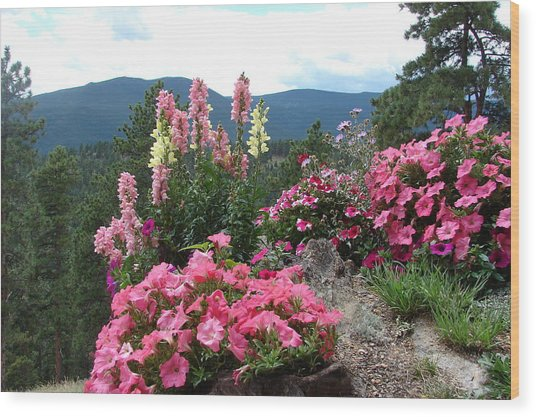 Pink On The Mountain Wood Print by Jody Neumann