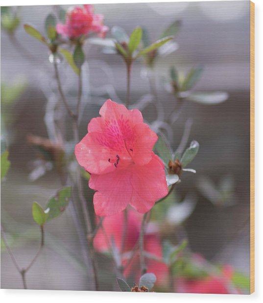 Pink Orange Flower Wood Print