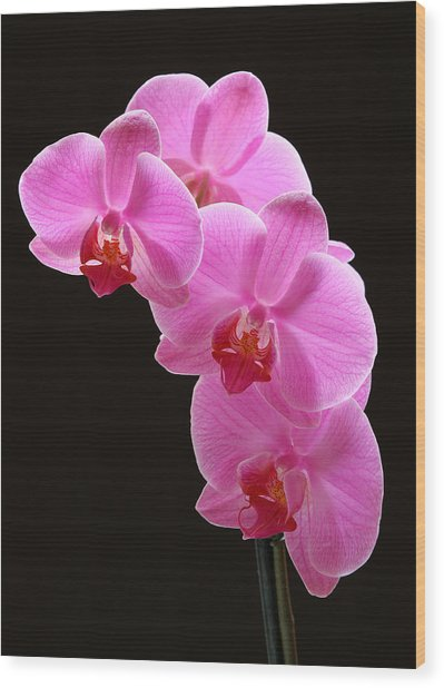 Pink Orchids Wood Print by Juergen Roth