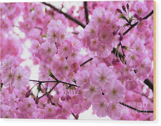 Pink Parasols Wood Print