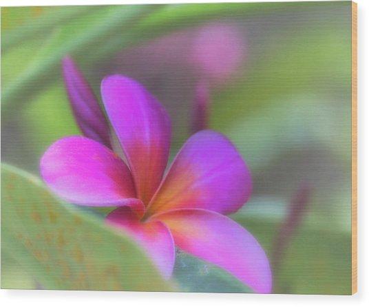 Pink Peekaboo Plumeria Wood Print