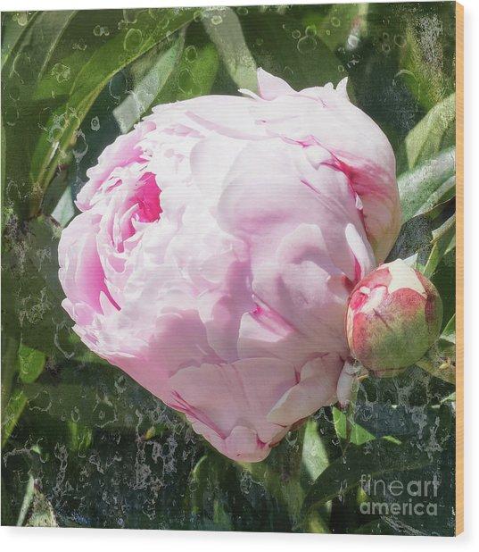 Pink Peony IIl Wood Print