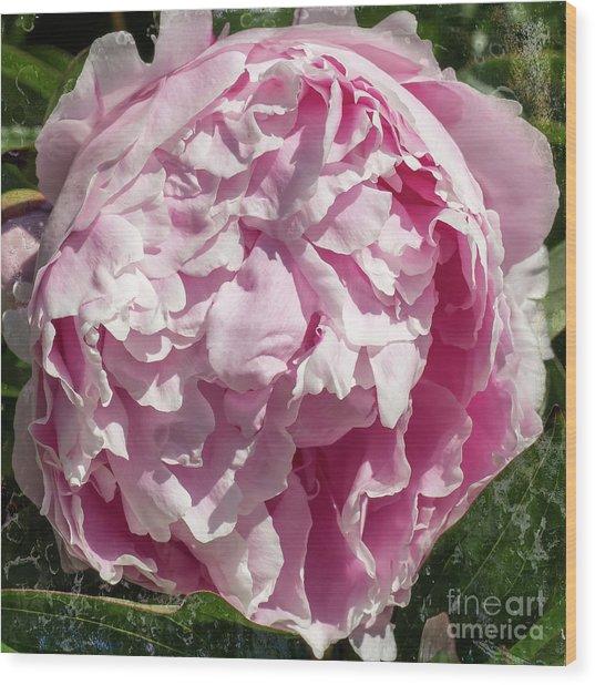 Pink Peony II Wood Print