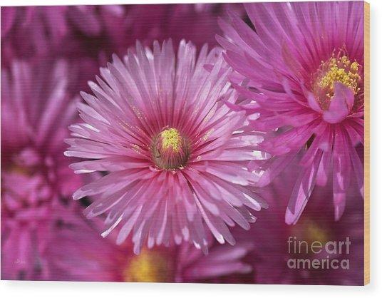 Pink Pigface Flowers Wood Print