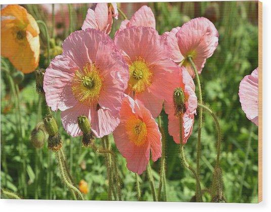 Pink Poppies 2 Wood Print