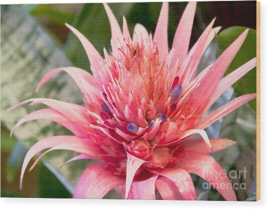 Pink Protea Art Wood Print