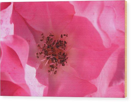 Pink Rose 1 Wood Print by Yvonne Ayoub
