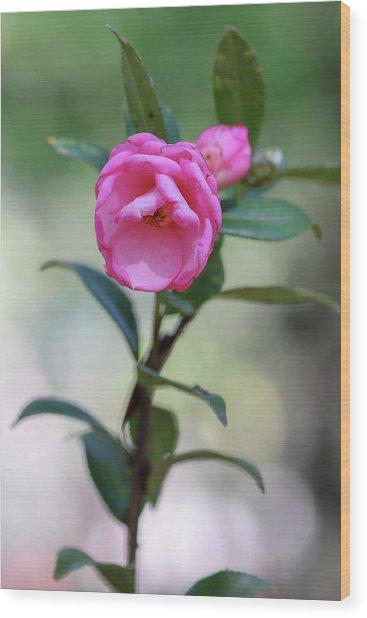 Pink Rose Flower Wood Print