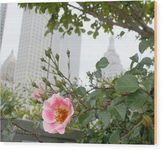 Pink Rose Of Tulsa Wood Print