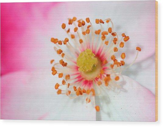 Pink Rose Wood Print by Svetlana Ledneva-Schukina