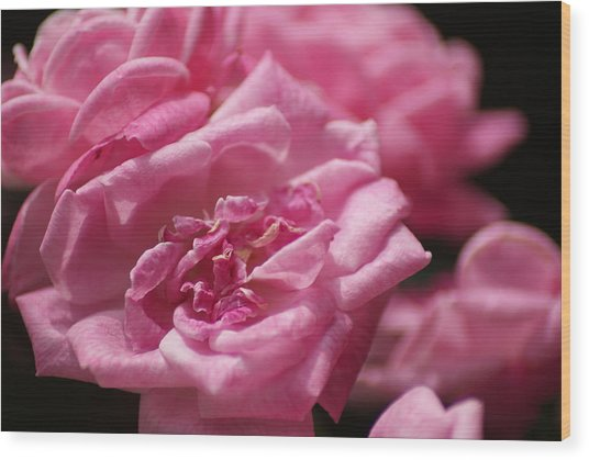 Pink Roses Wood Print by Heather Green