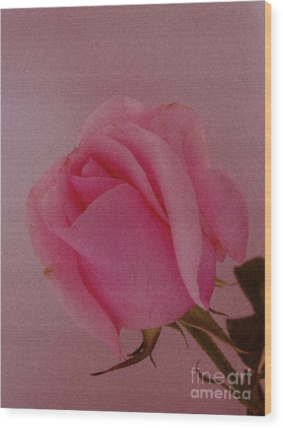 Pink Single Rose Wood Print