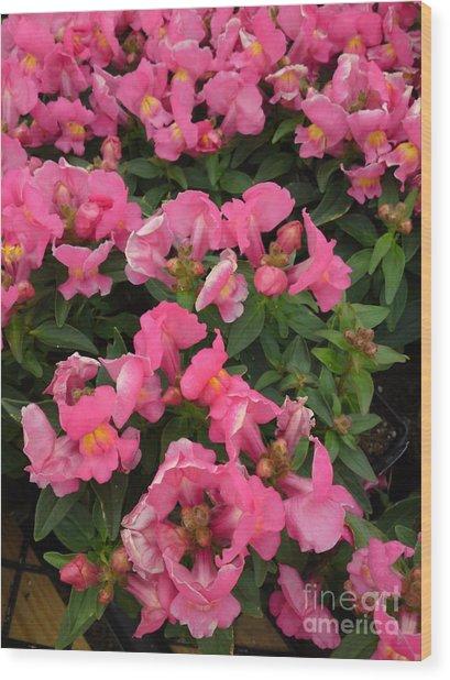 Pink Snapdragons Wood Print by DebiJeen Pencils