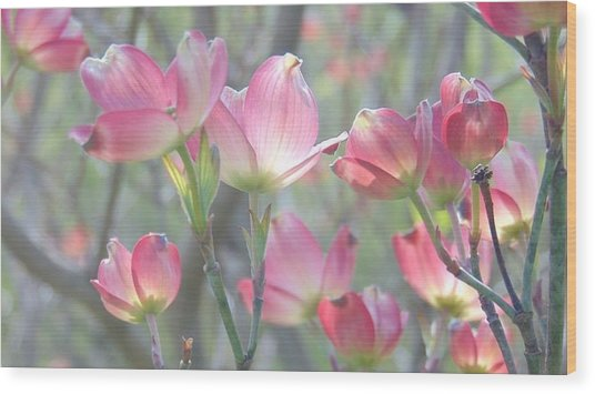 Pink Splendor Wood Print
