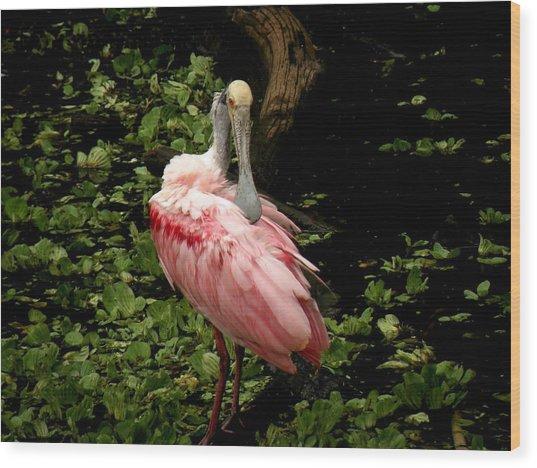 Pink Spoonbill Wood Print by Rosalie Scanlon