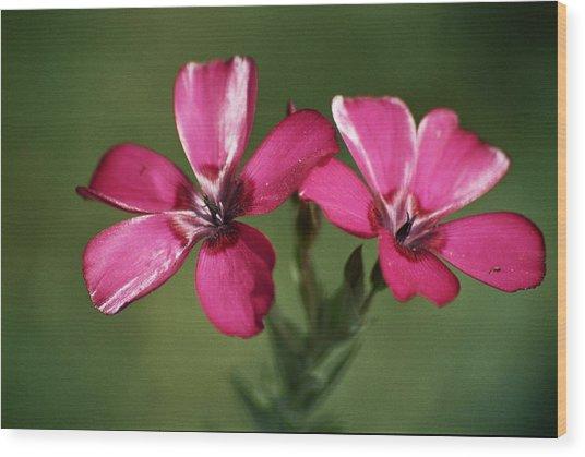 Pink Suspension Wood Print