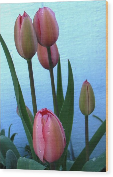 Pink Tulips 2012 Wood Print