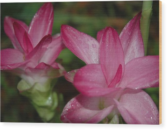 Pink Twins Wood Print