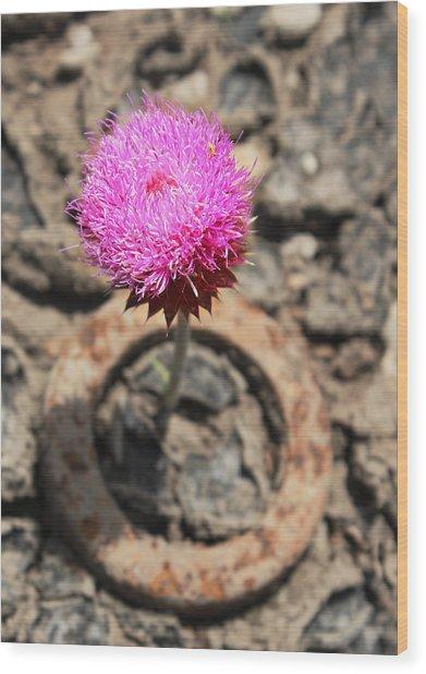 Pink Weed Wood Print