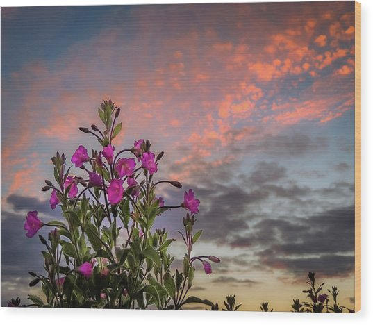 Wood Print featuring the photograph Pink Wildflowers At Sunset by James Truett
