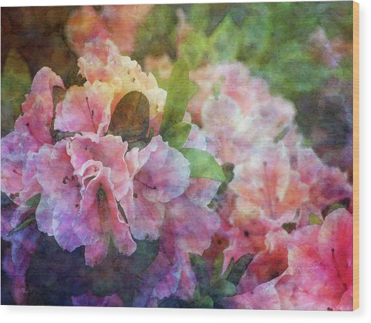 Pink With White Frills 1503 Idp_3 Wood Print