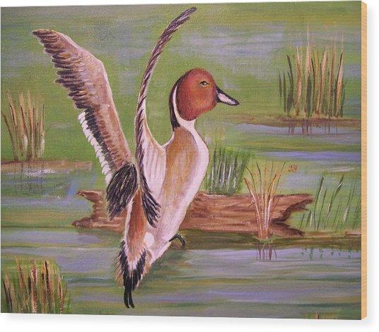 Pintail Duck II Wood Print