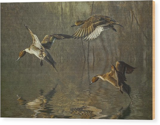 Pintail Ducks Wood Print