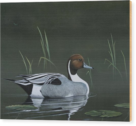 Pintail Portrait Wood Print by Don Griffiths