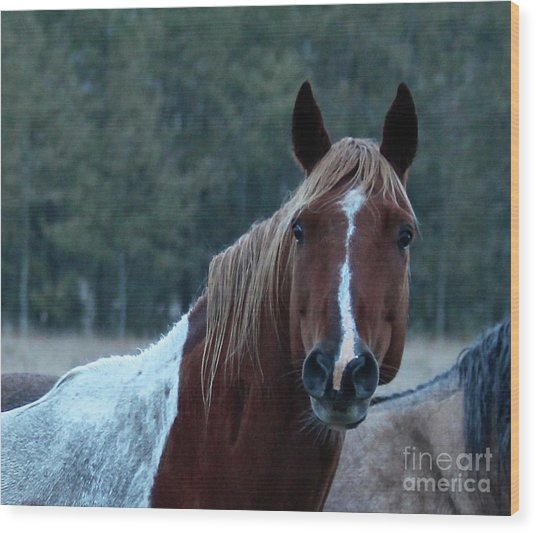 Wood Print featuring the photograph Pinto by Ann E Robson