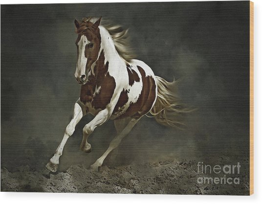 Pinto Horse In Motion Wood Print