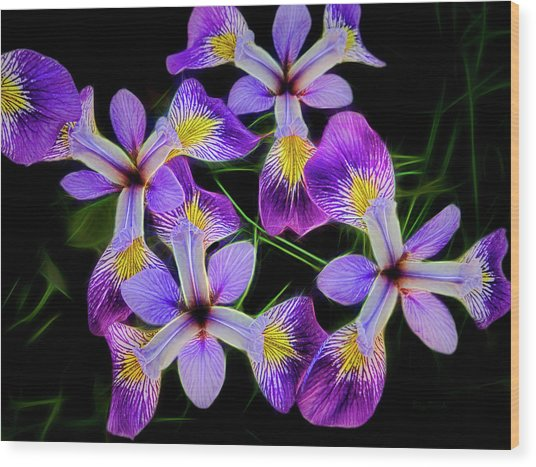 Pinwheel Purple Iris Glow Wood Print
