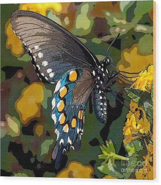Pipevine Swallowtail Butterfly Wood Print by David Smith