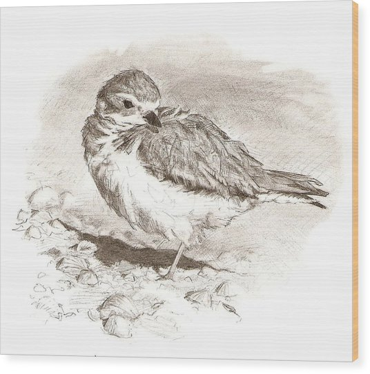 Piping Plover Wood Print